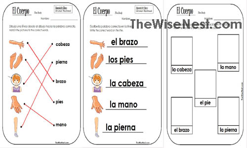 El Cuerpo Body Parts The Wise Nest – Body Parts in Spanish Worksheet